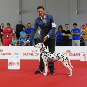World Dog Show 2015 - MILANO